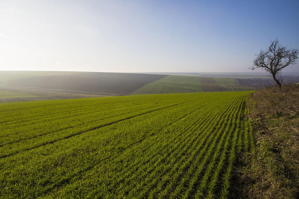 Rules published for the sale and purchase of agricultural land